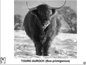 Touro Auroch - 7 000 anos atrás